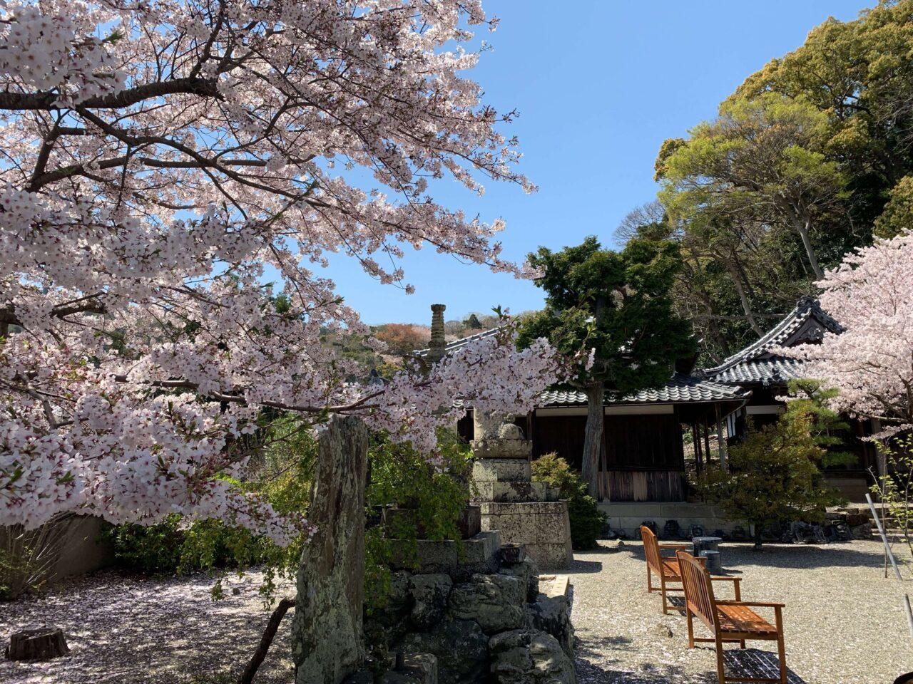 西念寺の桜